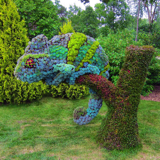 Clever Chameleon Topiary