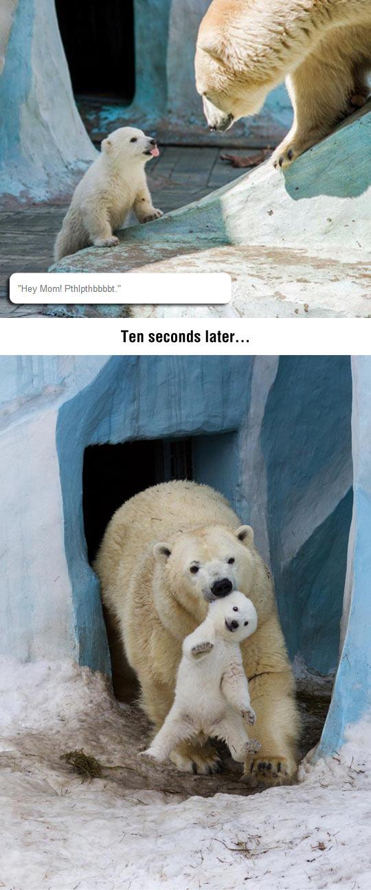 Disrespectful Polar Bear