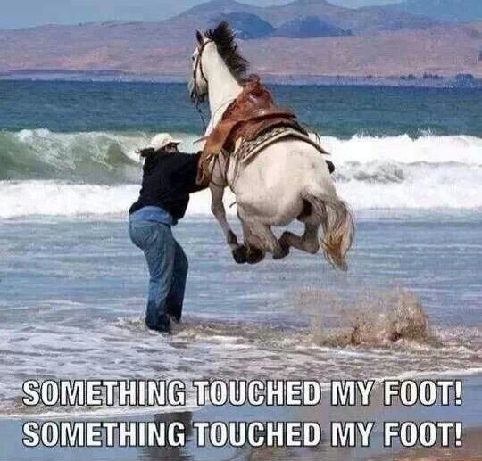 Every Time I Go To The Beach