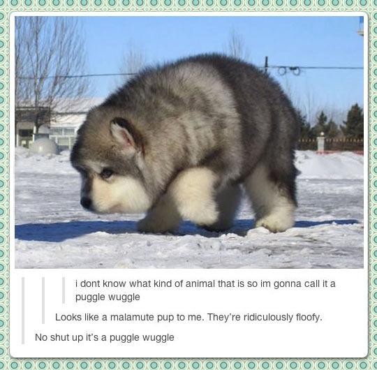 Puggle Wuggle