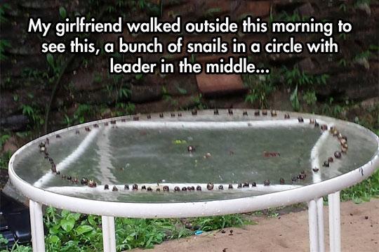 Secret Snail Ritual