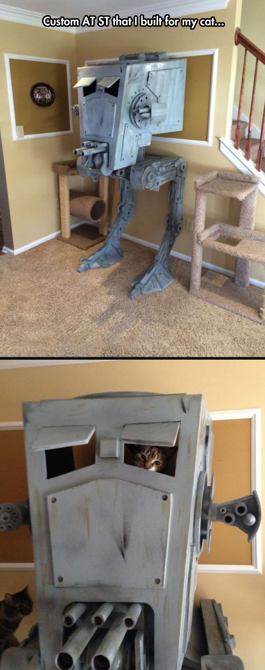cat-play-house-Star-Wars
