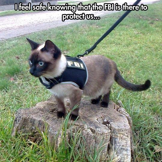 cool-FBI-cat-vest-street-clothes-pet
