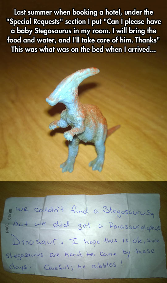 cool-Hotel-special-request-Stegosaurus-toy