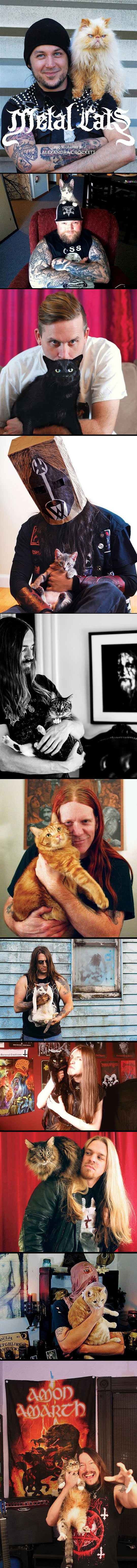 cool-Metal-cats-musician-black-rock
