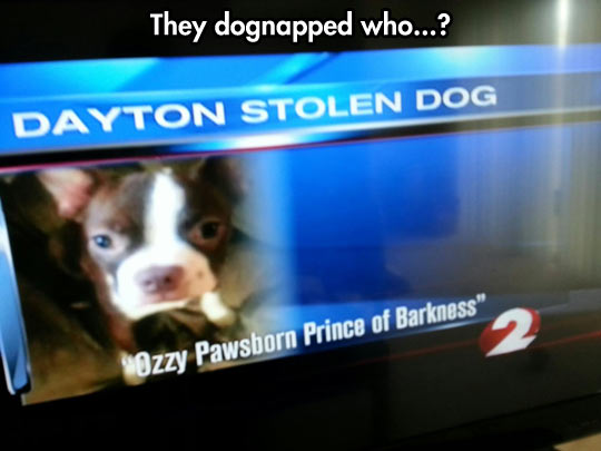 That Dog Name Is Marvelous