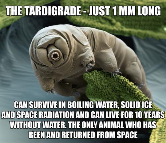 Meet The Strange Tardigrade