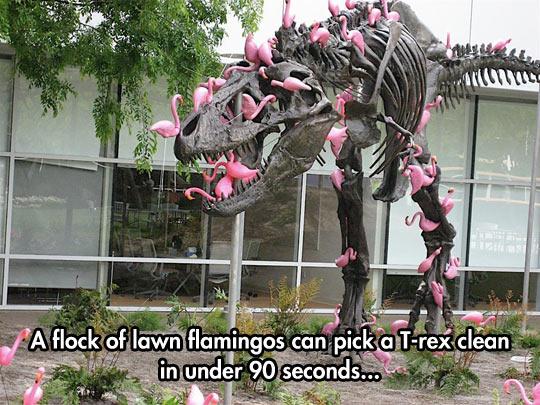 Flamingos Can Be So Dangerous