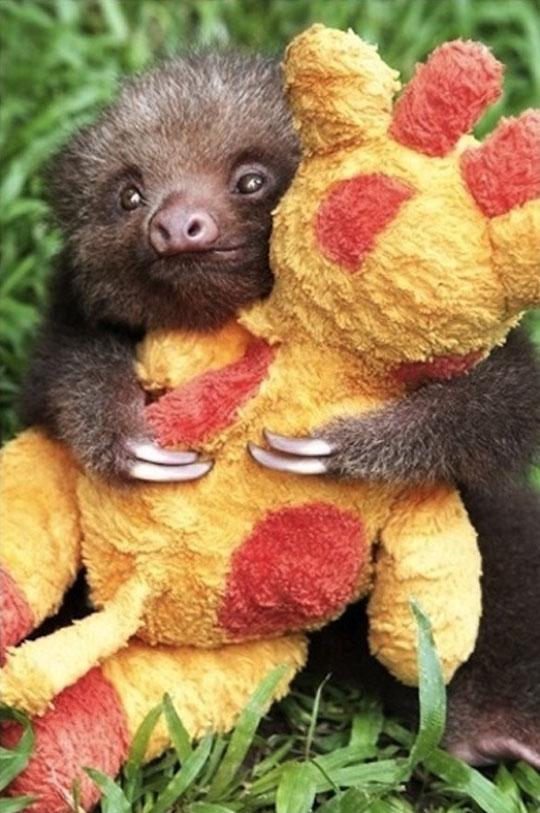 cool-baby-sloth-hold-stuffed-giraffe