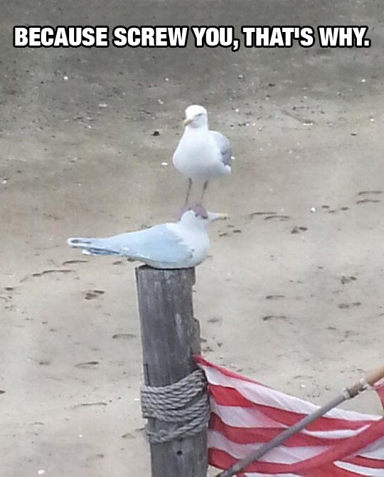 cool-beach-seagull-stand-face