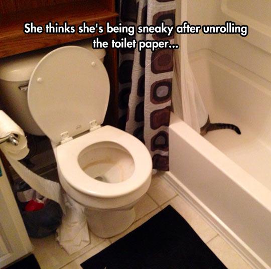 cool-cat-bathroom-hidden-tub-curtain-paper