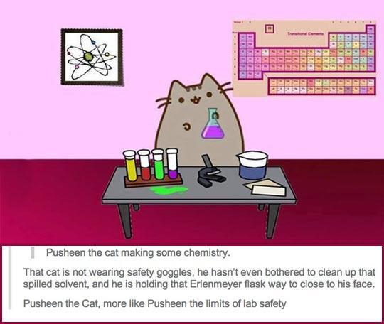 Kitty Doing Chemistry