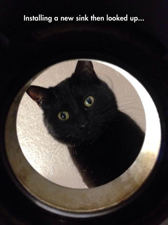 cool-cat-face-curious-sink