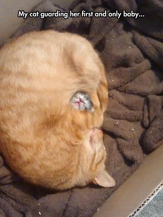 cool-cat-hugging-baby-kitten-sleeping