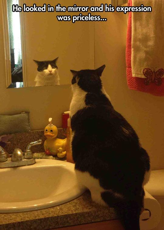 cool-cat-looking-himself-mirror