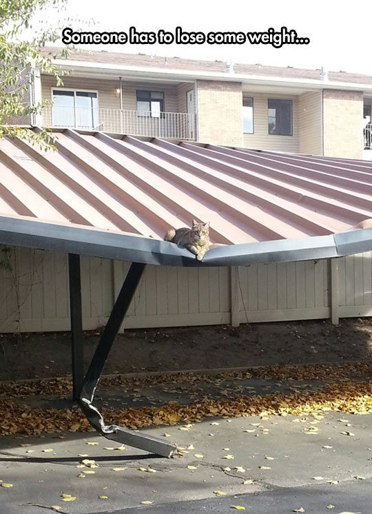 cool-cat-roof-parking-heavy
