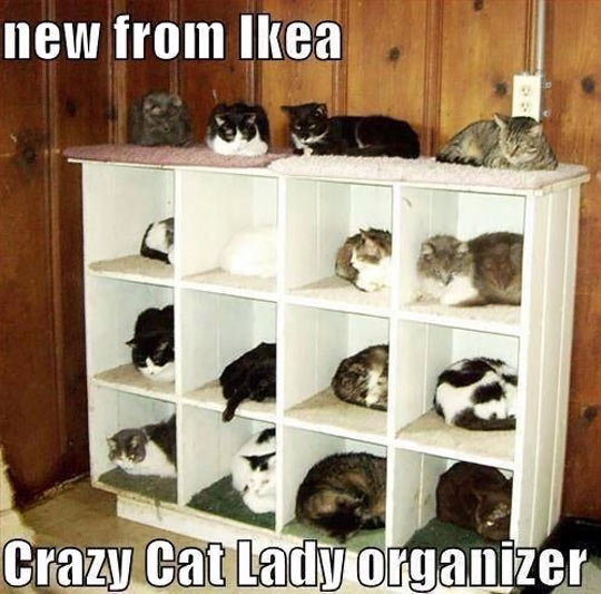 cool-cats-IKEA-organizer-sleeping
