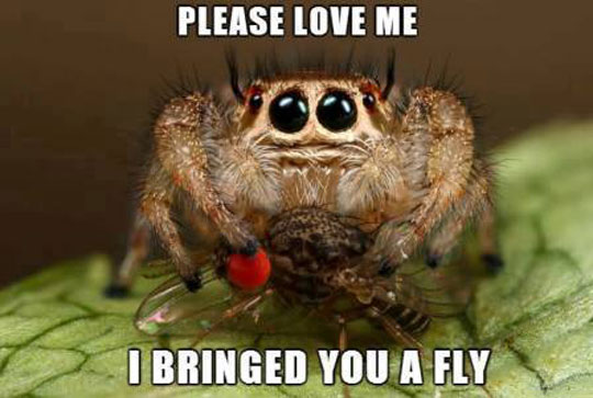Spider Bro Just Wants Love