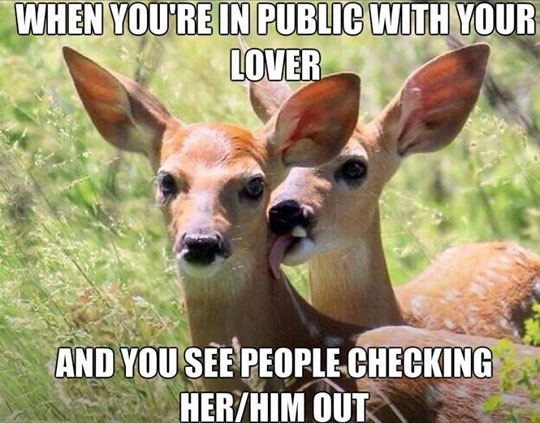 cool-deer-licking-couple