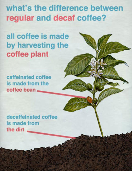cool-difference-regular-decaf-coffee