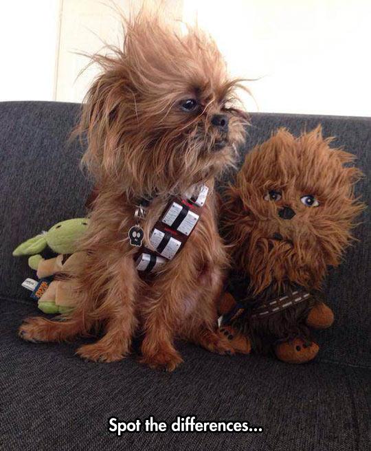 cool-dog-Chewbacca-toy-fur