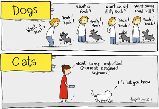 House Pets: Know The Difference