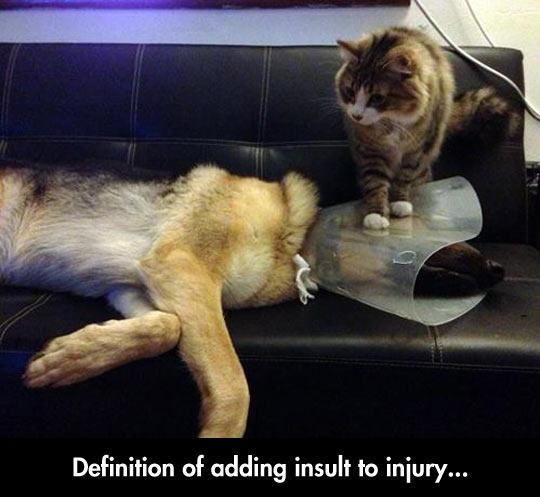 cool-dog-cat-plastic-cone-collar