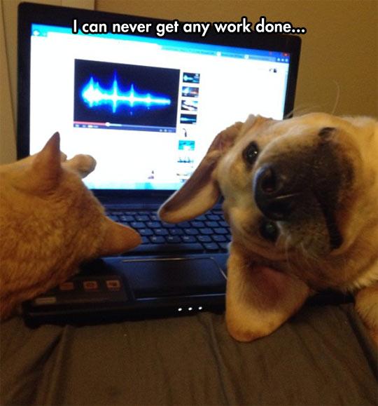 cool-dog-cat-working-laptop
