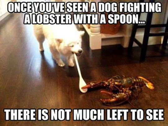 cool-dog-fighting-lobster-spoon-chair