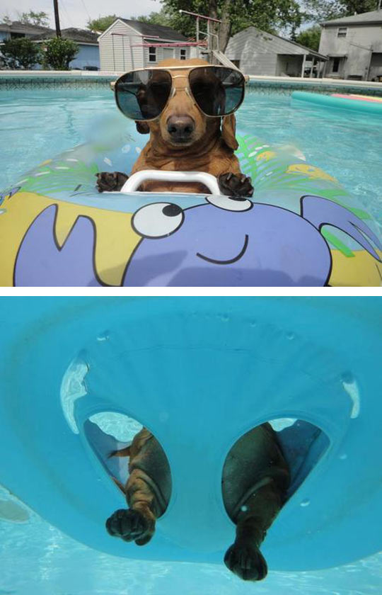 Just Chilling In The Pool