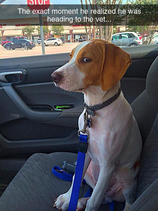 cool-dog-vehicle-vet-look