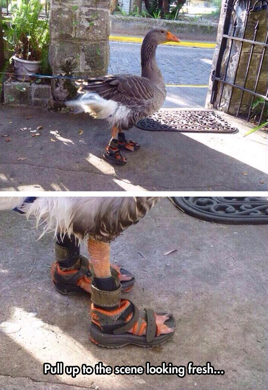 cool-duck-sandals-walking-house