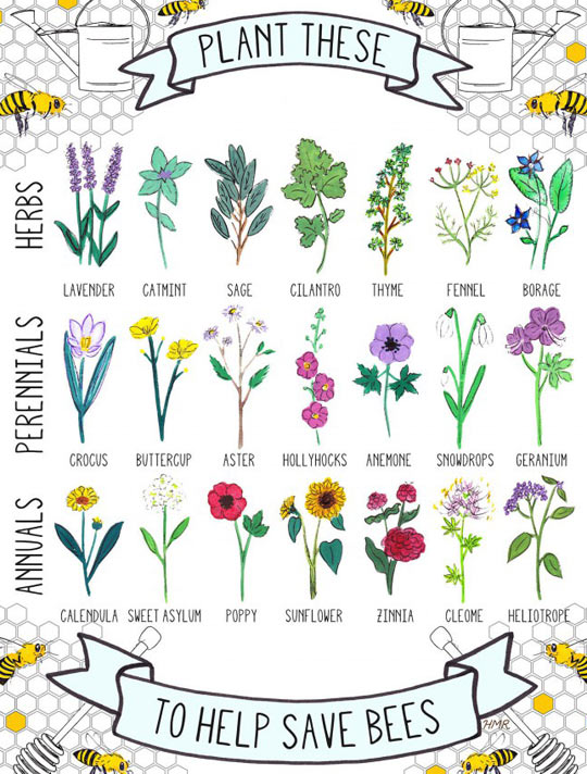 cool-flowers-bees-lavender-catmint