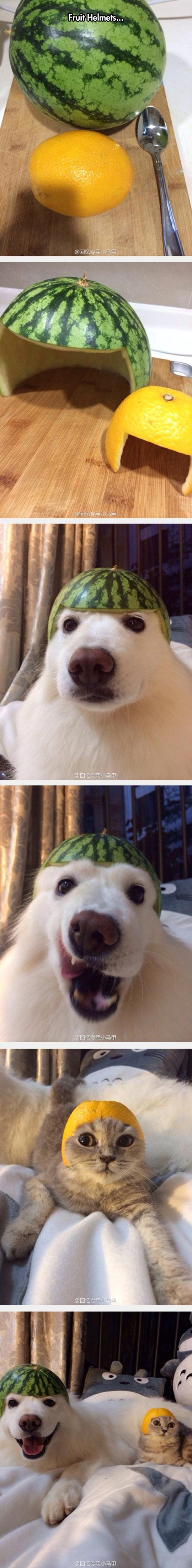 cool-fruit-helmet-dog-cat-lemon-watermelon