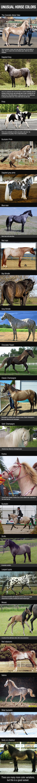 Breathtaking Horses