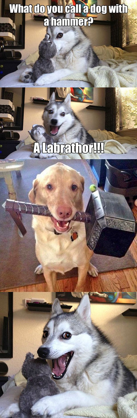 cool-joke-dog-Thor-hammer