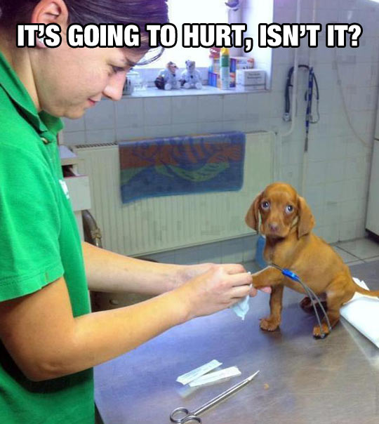 Mister Vet, Give It To Me Straight