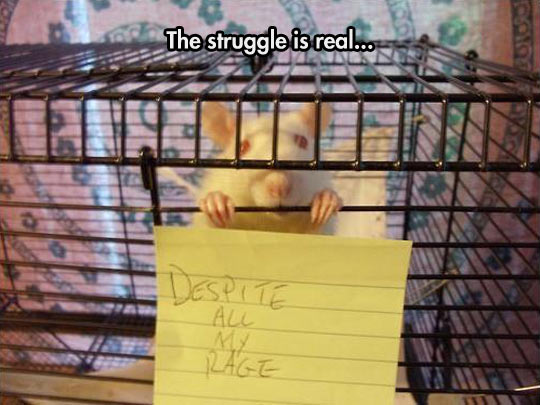 cool-mice-cage-note-rage
