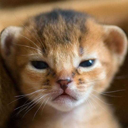 cool-newborn-baby-lion-little
