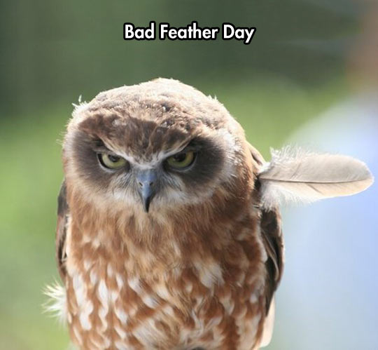 cool-owl-angry-wing-feather