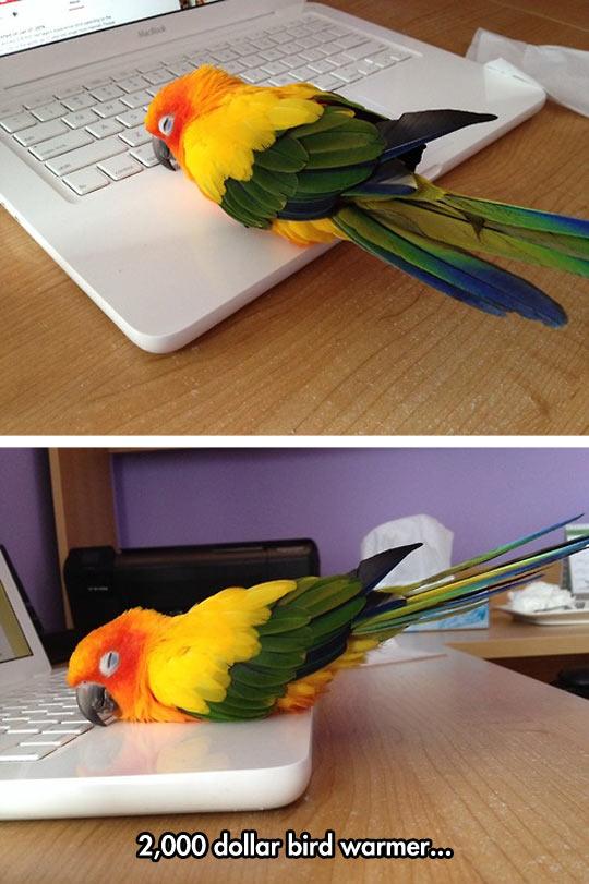 cool-parrot-computer-sleeping-notebook