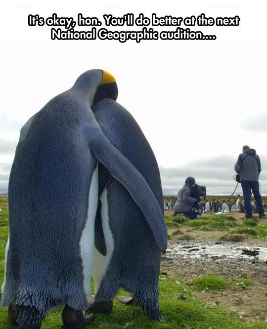 cool-penguin-hug-cute-camera