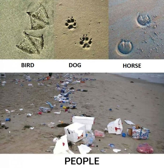 Footprints Of Different Animals