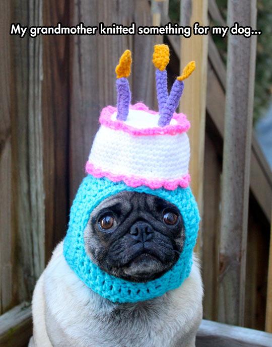 cool-pug-dog-happy-birthday-hat
