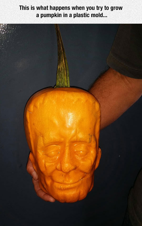 Growing A Pumpkin
