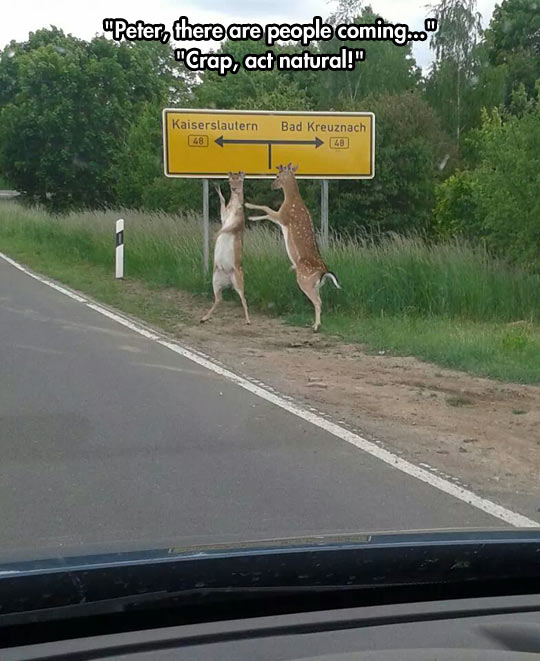 cool-road-deer-sign-forest