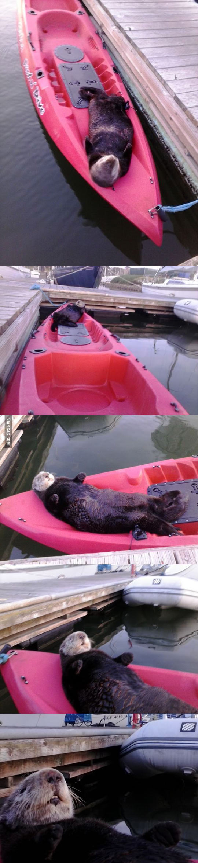 Sleepy Sea Otter