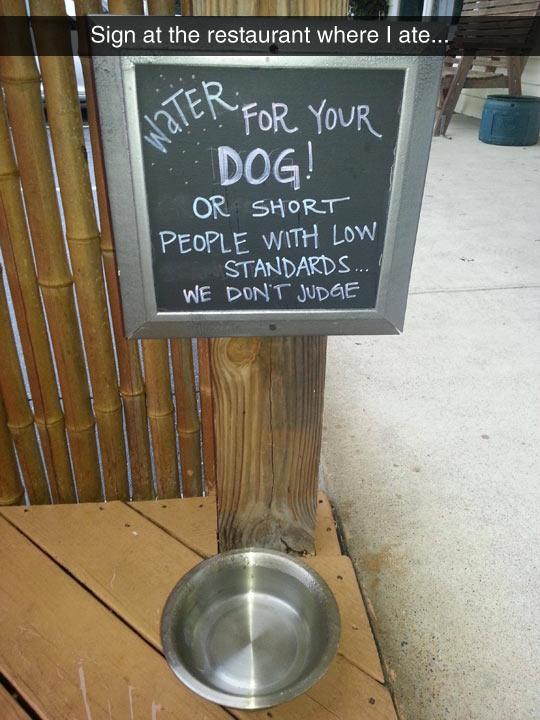 cool-sign-water-bowl-dog-bar