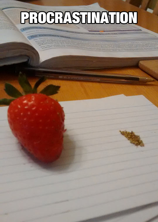 cool-strawberry-seeds-study-book