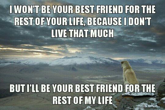 True Friends Are Faithful